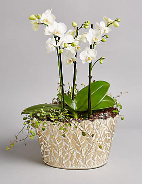 The Collection Luxury Orchid Planter