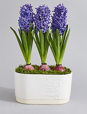 Summer Flowering Planter (Pre Order)