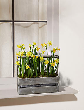 Windowbox Spring Bulb Planter