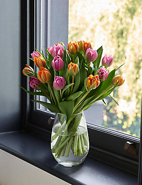 The Collection Luxury Tulips