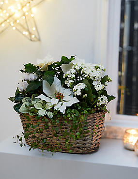White Classic Christmas Basket (Pre Order)