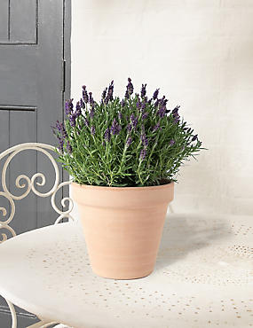 Butterfly Lavender Patio Basket