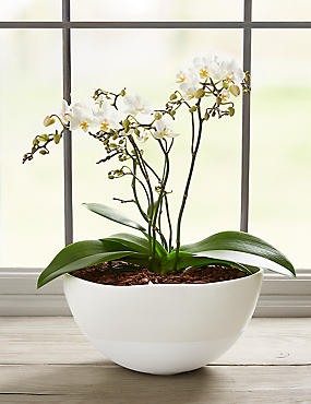 Autograph™ Multifloral Jungle Orchid