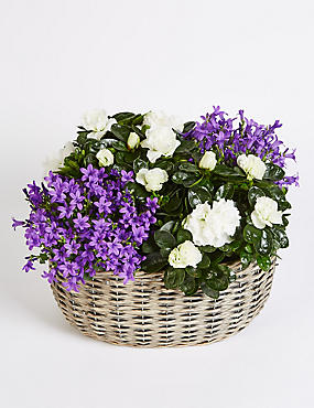 Purple Campanula Basket