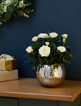 Christmas Sparkling Hyacinth Star