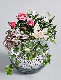 Flowering Globe (Free Delivery from 20-28 March)