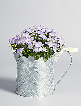 Easter Campanula Jug with Free Chocolates