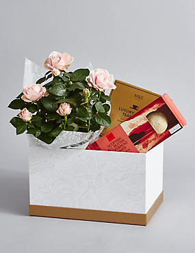 Shortbread Biscuits, Luxury Tea & Rose Hamper