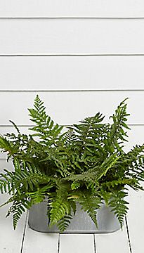 Foliage Galvanised Planter