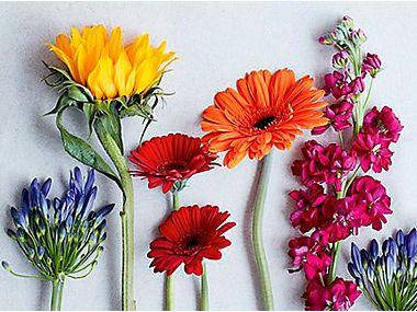 flower arrangement flowers