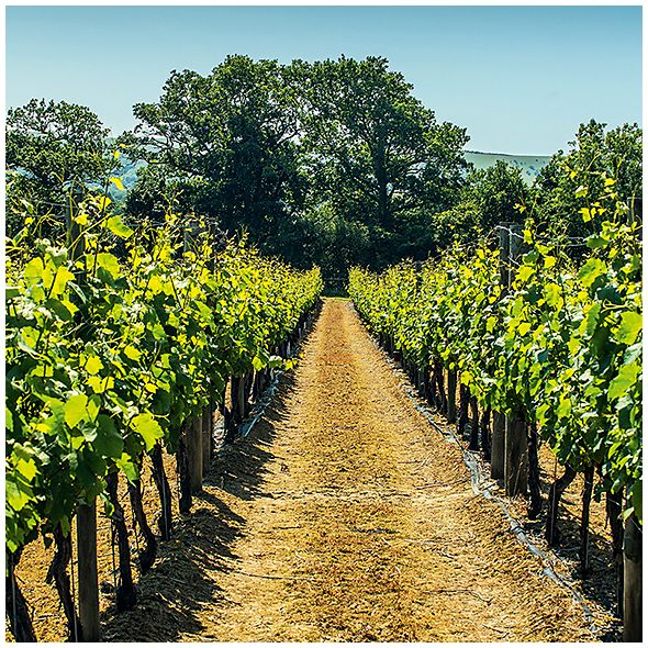 Discover the english vineyards