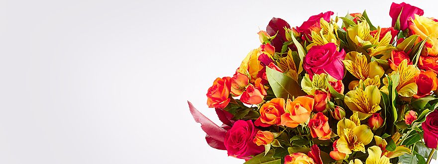 Shop new autumn flowers
