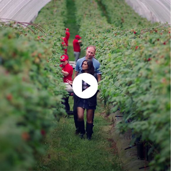 Harry Hall and Lucy Verasamy in a raspberry farm