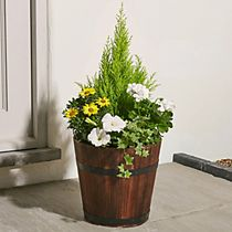 Extra-large summer flowering barrel
