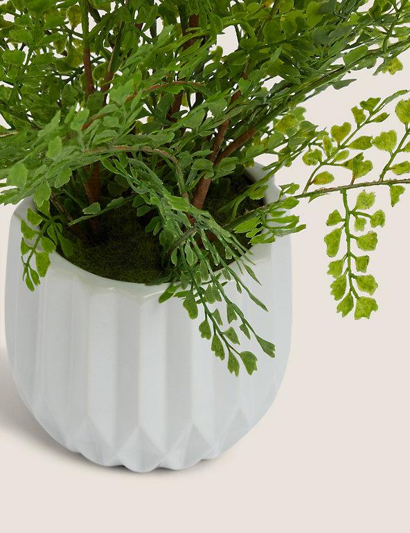 Artificial Large Fern In Ceramic Pot M S