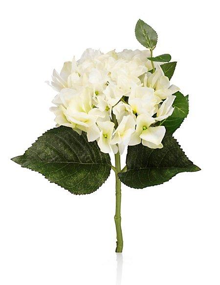 Short Hydrangea