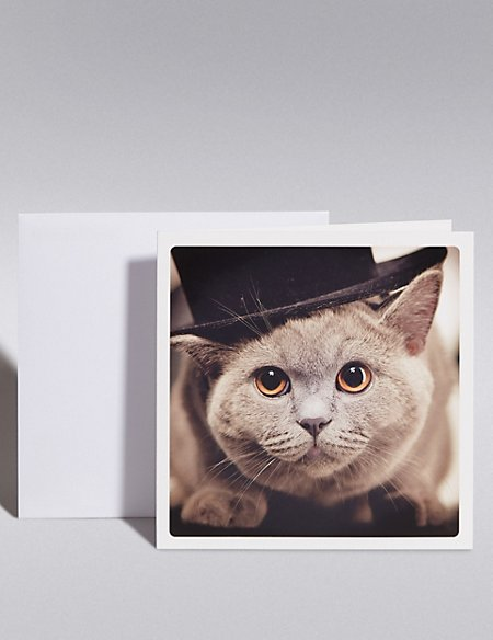 Grey Cat Blank Card