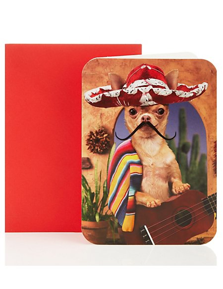 Mexican Dog Blank Greetings Card