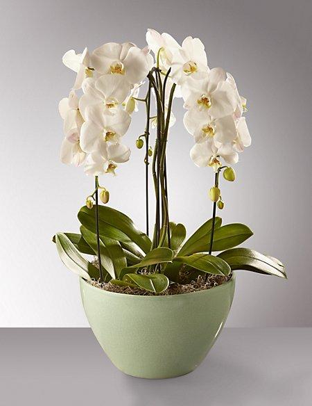 Autograph™ Orchid Cascade Bowl (Pre-Order)