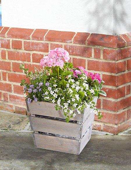 Flowering in Abundance Crate