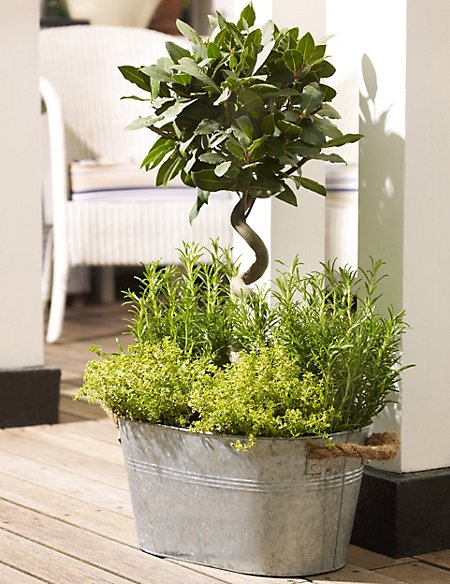 Luxury Herb Planter