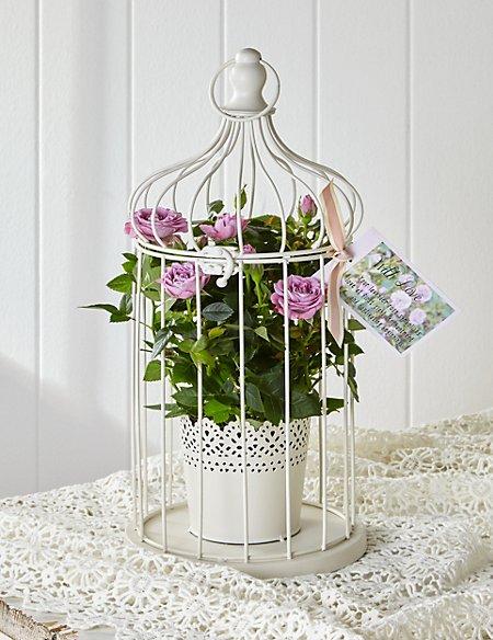 Vintage Rose Bird Cage