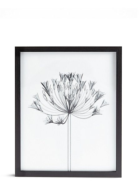 Agapanthus X-Ray Floral Wall Art