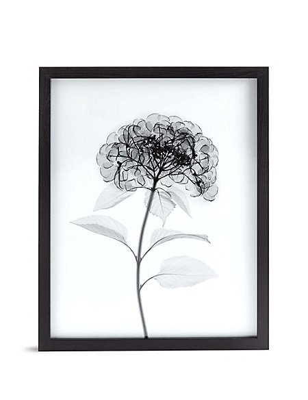 Hydrangea X-Ray Floral Wall Art