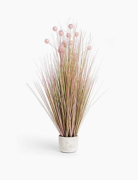 Tall Pom Pom Grass in Concrete Pot