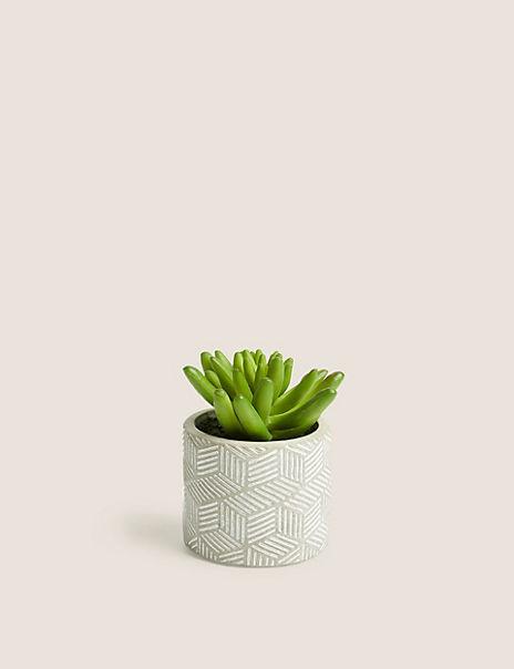 Mini Succulent In Concrete Pot