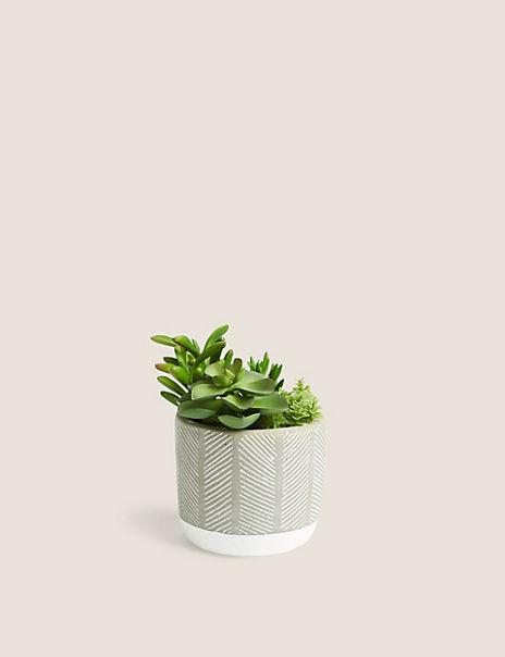 Succulent Garden in Textured Concrete Pot