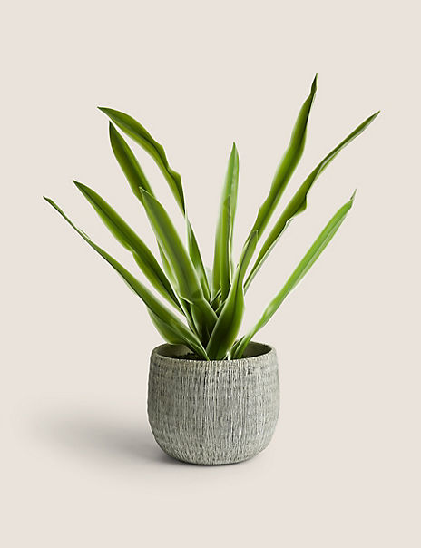 House Plant In Textured Pot