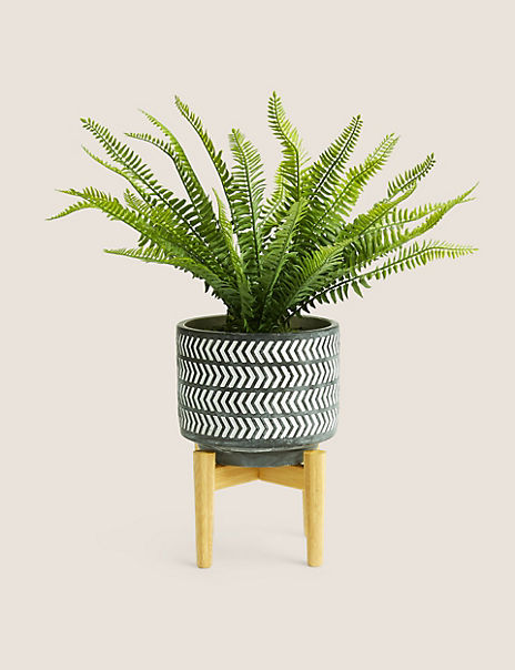 Boston Fern in Pot on Stand