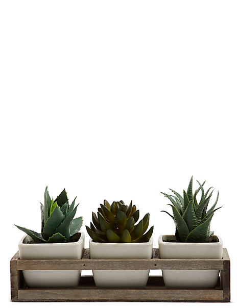 Succulent Trio in Wooden Tray