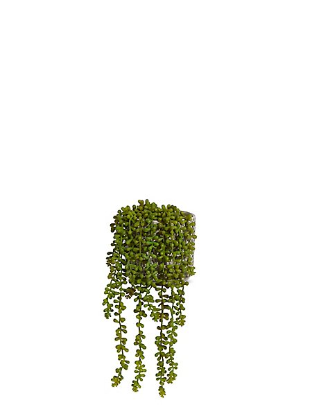 String of Pearls Plant in Ceramic