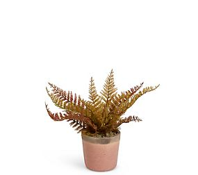 Small Fern in Crackle Pot