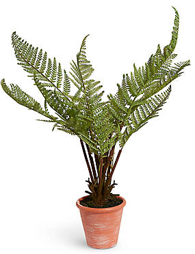 Large Fern in Terracotta Pot
