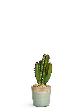 Small Cacti in Crackle Pot