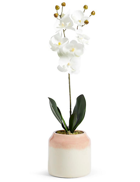 Large Orchid in Ombre Ceramic