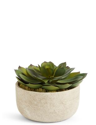 Large Echeveria In Stone Pot by Marks & Spencer
