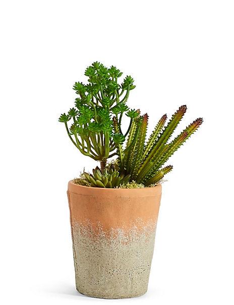 Succulent Garden in Tall Terracotta Pot