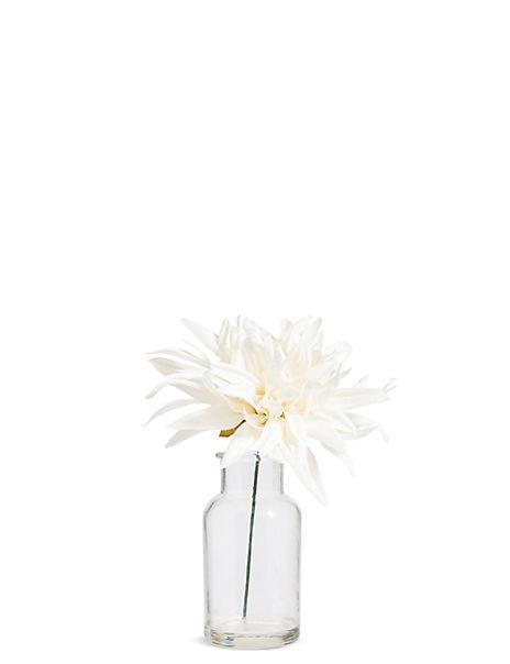 Dahlia in Bottle Vase