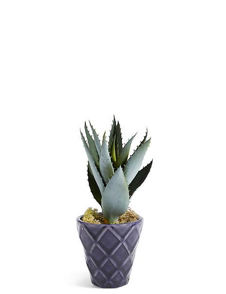 Aloe in Dark Blue Embossed Ceramic