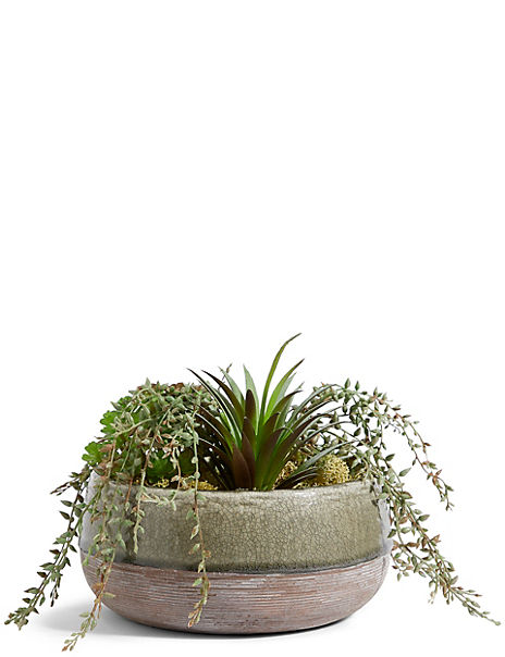 Mixed Succulents in Crackle Ceramic
