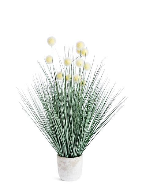 Grass & White Pom Pom in Pot