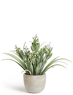 Berry Grass in Cement Pot