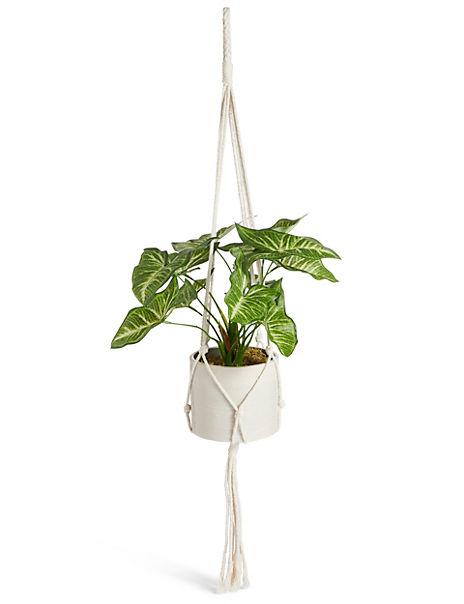 Hanging Lilypad Macrame Plant