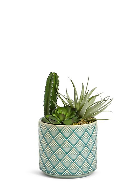 Cactus Selection in Ceramic Pot