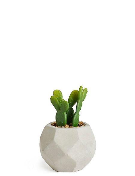 Mini Cacti Pot