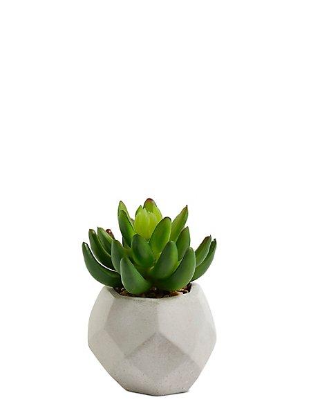 Small Aloe Pot
